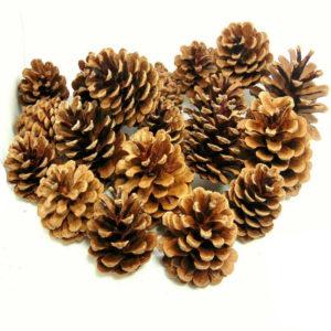 Natural Pine Cones 1kg Quality Pinecones