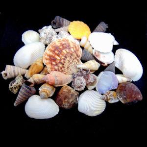 100g Natural Shells - Seashells Beach Shells Wedding Display Craft Mixed Shells