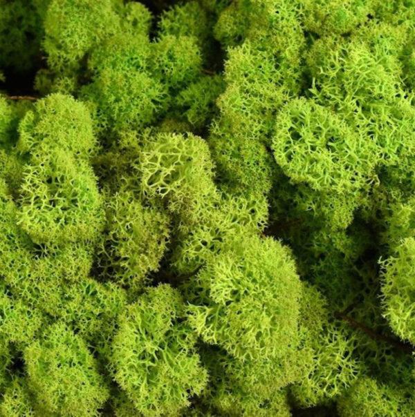 Preserved Norwegian Reindeer Moss Lime Green